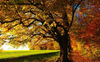20. října, den, kdy mají stromy svátek